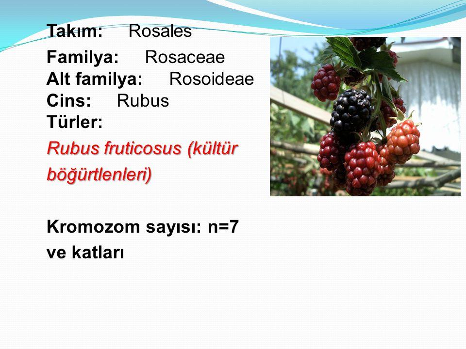 Takım: Rosales Familya: Rosaceae Alt familya: Rosoideae Cins: Rubus Türler: Rubus fruticosus (kültür böğürtlenleri) Kromozom sayısı: n=7 ve katları