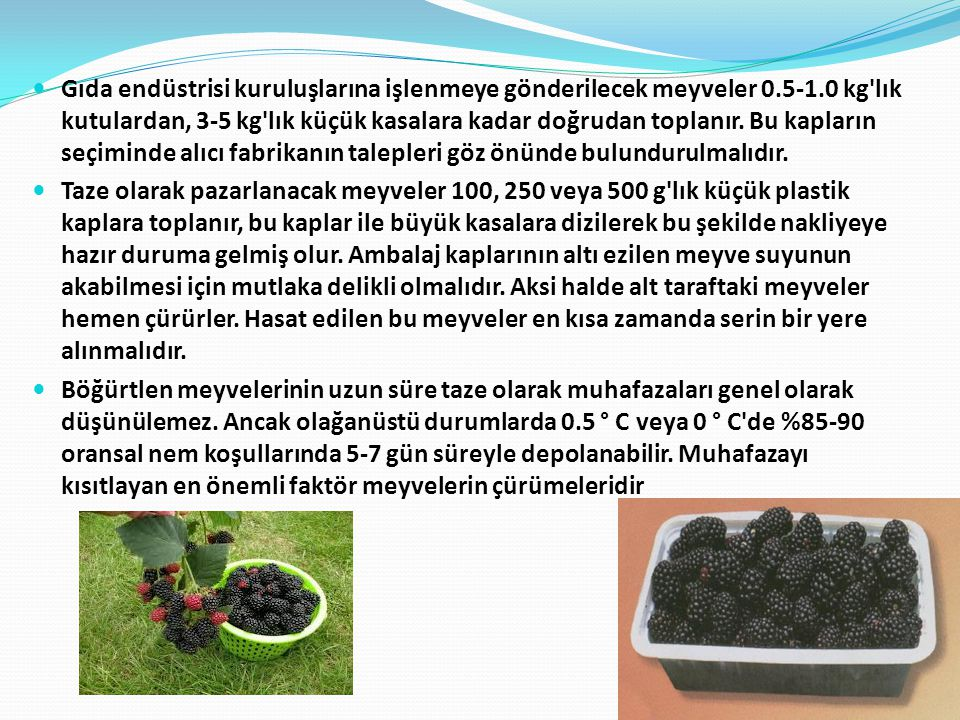 Gıda endüstrisi kuruluşlarına işlenmeye gönderilecek meyveler 0.5-1.0 kg'lık kutulardan, 3-5 kg'lık küçük kasalara kadar doğrudan toplanır. Bu kapları