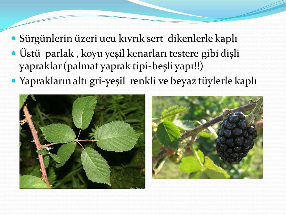 Çiçek yapısı Rubus'larda temel kromozom sayısı n=7 dir Rosaceae çiçek yapısı görülür.