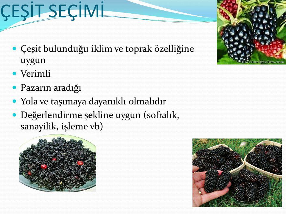 Meyve türleri ORAK ve bitkisel kimyasallar ORAK (umole TE/g) Antosiyani n (mg/100 g) Ellagic Asit (mg/100 g) Quercetin (mg/1000g) Kaempferol (mg/1000g) Myricetin (mg/1000 g) Siyah Ahududu 168-190214-5895.37--- Böğürtlen 58-10083-3263.690.5-3.50.1-0.3- Morion üzümü 46-90109-1555.83--- Boysen üzümü 35-85120-1605.98--- Kırmızı Ahududu 27-5020-653.390.118- 0.121 0.1-12.3 Çilek 26400.63-1.60.5-0.90.5-1.2- Portakal 8-37----- Vişne 21----- Elma 3-101-10---- Şeftali 8-135---- Kırmızı Üzüm 11-221000---- Kivi 9----- Yeşil üzüm 6----- Muz 5-11----- Mango 3----- Bögürtlenin besin değeri antioksidandır Üzümsü meyveler içerdikleri gallic asit, quercitin ve ellagic asit gibi fenol ve flavonoid bileşikleri ile önemli bir antioksidandır.