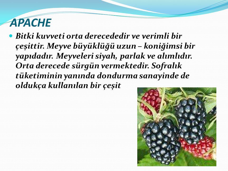 APACHE Bitki kuvveti orta derecededir ve verimli bir çeşittir. Meyve büyüklüğü uzun – koniğimsi bir yapıdadır. Meyveleri siyah, parlak ve alımlıdır. O