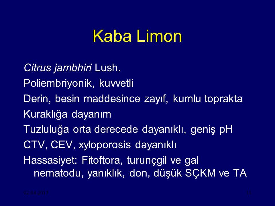 02.04.201511 Kaba Limon Citrus jambhiri Lush.