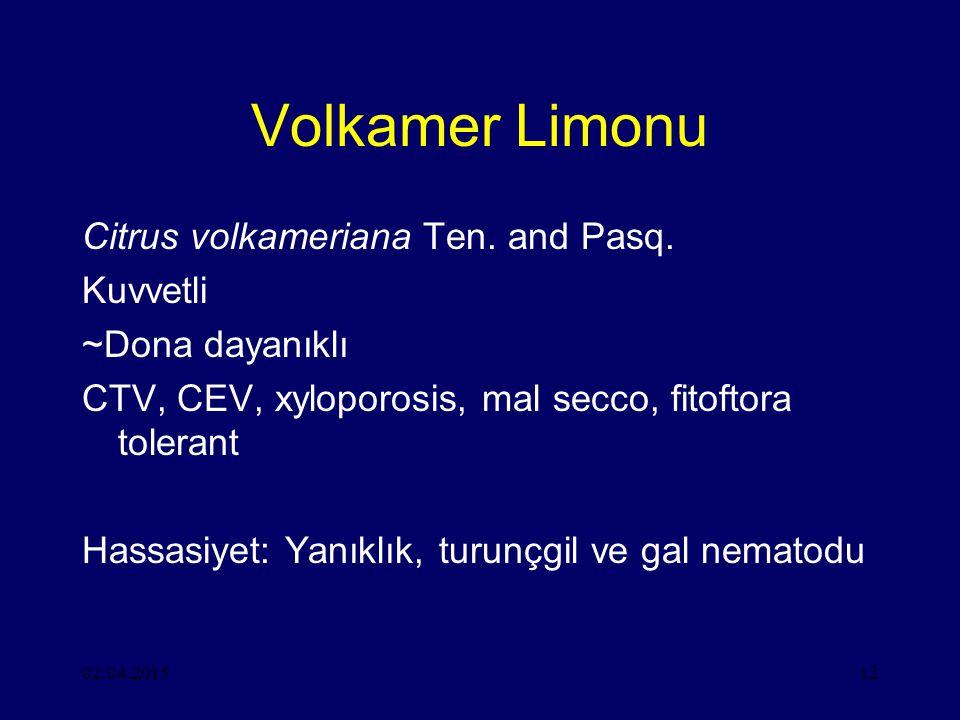 02.04.201512 Volkamer Limonu Citrus volkameriana Ten.