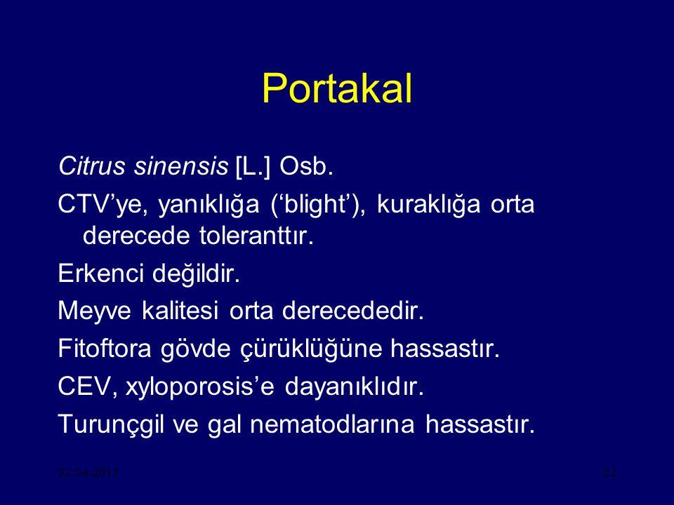 02.04.201522 Portakal Citrus sinensis [L.] Osb.