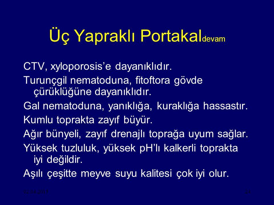 02.04.201524 Üç Yapraklı Portakal devam CTV, xyloporosis'e dayanıklıdır.