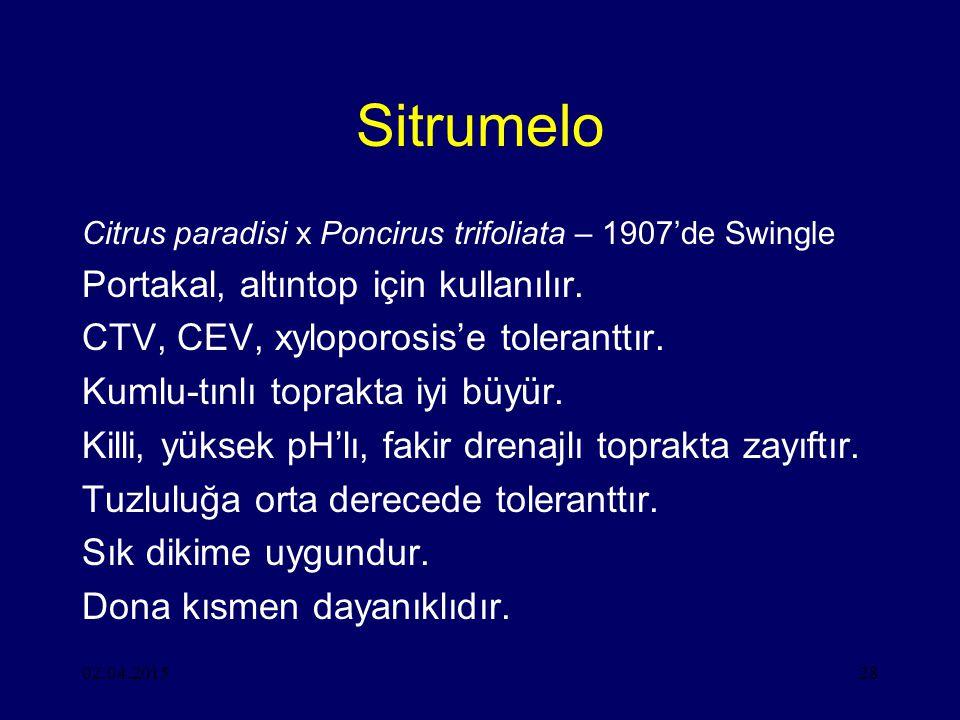 02.04.201528 Sitrumelo Citrus paradisi x Poncirus trifoliata – 1907'de Swingle Portakal, altıntop için kullanılır.