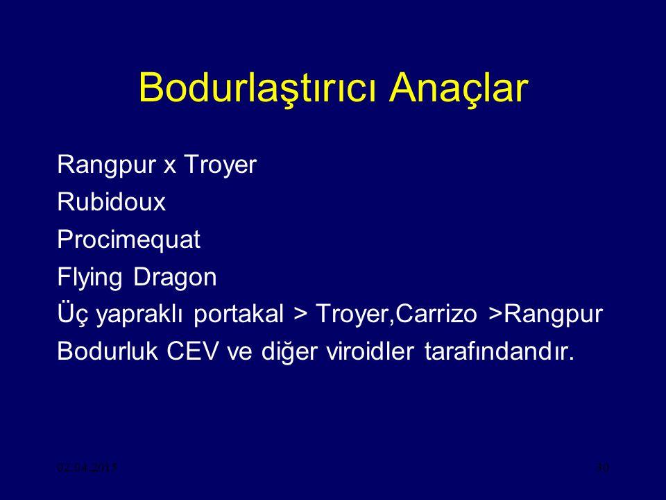 02.04.201530 Bodurlaştırıcı Anaçlar Rangpur x Troyer Rubidoux Procimequat Flying Dragon Üç yapraklı portakal > Troyer,Carrizo >Rangpur Bodurluk CEV ve diğer viroidler tarafındandır.
