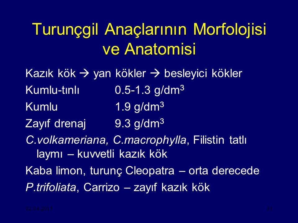 02.04.201531 Turunçgil Anaçlarının Morfolojisi ve Anatomisi Kazık kök  yan kökler  besleyici kökler Kumlu-tınlı0.5-1.3 g/dm 3 Kumlu1.9 g/dm 3 Zayıf drenaj9.3 g/dm 3 C.volkameriana, C.macrophylla, Filistin tatlı laymı – kuvvetli kazık kök Kaba limon, turunç Cleopatra – orta derecede P.trifoliata, Carrizo – zayıf kazık kök