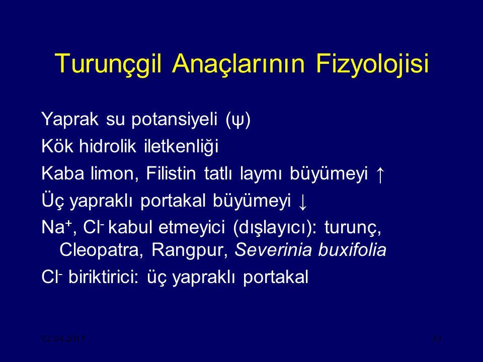02.04.201533 Turunçgil Anaçlarının Fizyolojisi Yaprak su potansiyeli (ψ) Kök hidrolik iletkenliği Kaba limon, Filistin tatlı laymı büyümeyi ↑ Üç yapraklı portakal büyümeyi ↓ Na +, Cl - kabul etmeyici (dışlayıcı): turunç, Cleopatra, Rangpur, Severinia buxifolia Cl - biriktirici: üç yapraklı portakal