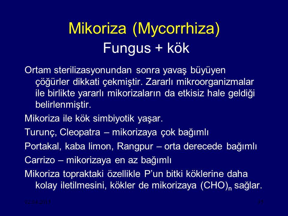 02.04.201535 Mikoriza (Mycorrhiza) Fungus + kök Ortam sterilizasyonundan sonra yavaş büyüyen çöğürler dikkati çekmiştir.