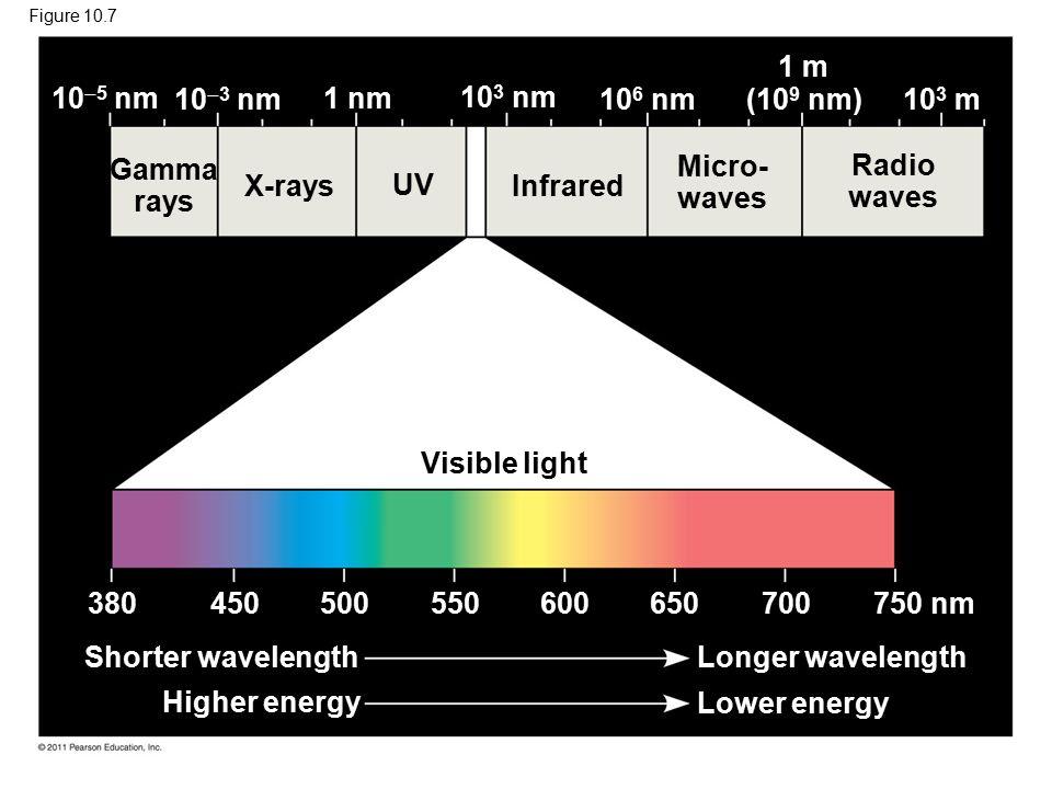 Figure 10.7 Gamma rays X-rays UV Infrared Micro- waves Radio waves Visible light Shorter wavelength Longer wavelength Lower energy Higher energy 380 450500 550600650 700 750 nm 10  5 nm 10  3 nm 1 nm 10 3 nm 10 6 nm (10 9 nm) 10 3 m 1 m