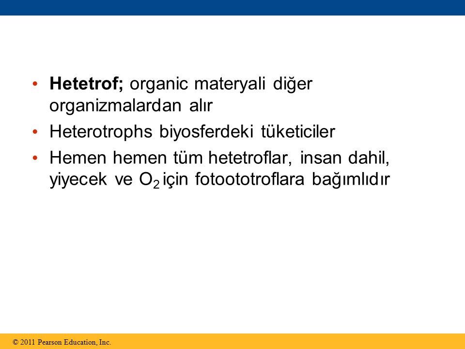 Hetetrof; organic materyali diğer organizmalardan alır Heterotrophs biyosferdeki tüketiciler Hemen hemen tüm hetetroflar, insan dahil, yiyecek ve O 2 için fotoototroflara bağımlıdır © 2011 Pearson Education, Inc.