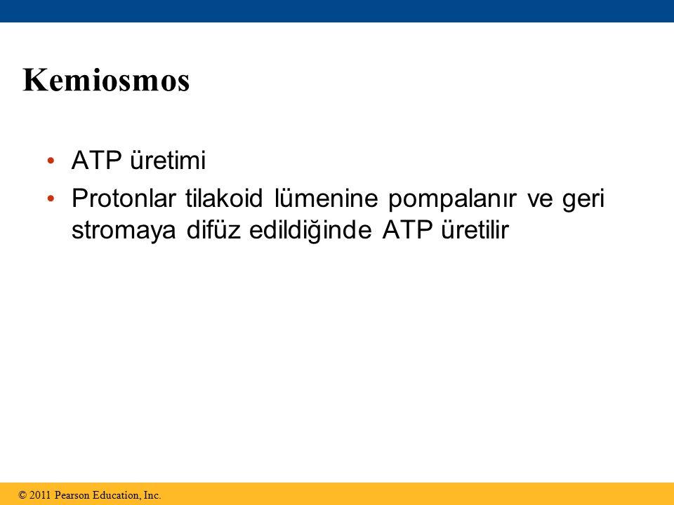 Kemiosmos ATP üretimi Protonlar tilakoid lümenine pompalanır ve geri stromaya difüz edildiğinde ATP üretilir © 2011 Pearson Education, Inc.