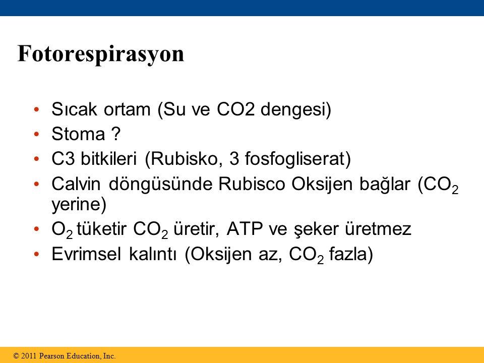 Fotorespirasyon Sıcak ortam (Su ve CO2 dengesi) Stoma ? C3 bitkileri (Rubisko, 3 fosfogliserat) Calvin döngüsünde Rubisco Oksijen bağlar (CO 2 yerine)