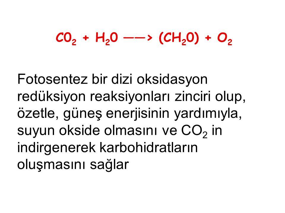 C0 2 + H 2 0 ——> (CH 2 0) + O 2 Fotosentez bir dizi oksidasyon redüksiyon reaksiyonları zinciri olup, özetle, güneş enerjisinin yardımıyla, suyun okside olmasını ve CO 2 in indirgenerek karbohidratların oluşmasını sağlar