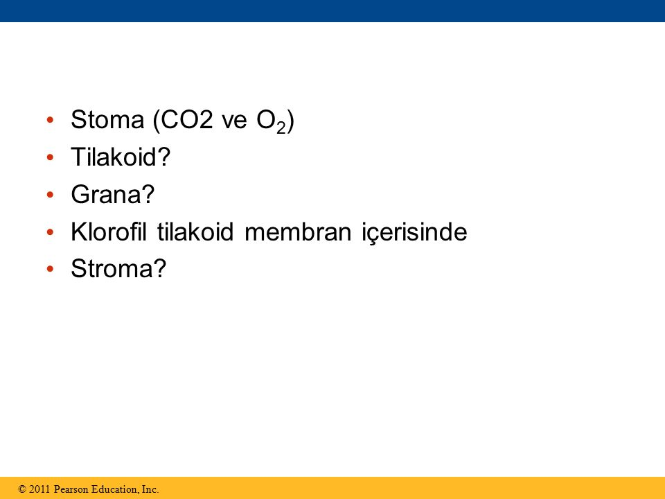 Stoma (CO2 ve O 2 ) Tilakoid? Grana? Klorofil tilakoid membran içerisinde Stroma? © 2011 Pearson Education, Inc.