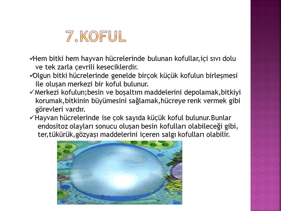  Hayvan hücrelerinde çekirdeğe yakın bir bölgede bulunan sentrozomlar,birbirine dik konumdaki iki adet sentriyolden oluşmuş organellerdir.  Hücre bö