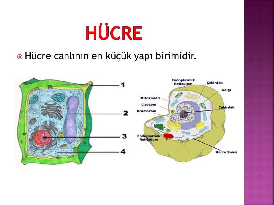  Ribozomlar, doğadaki bütün canlı hücrelerde bulunurlar.