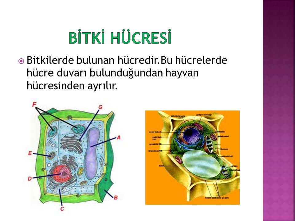  Hücre canlının en küçük yapı birimidir.