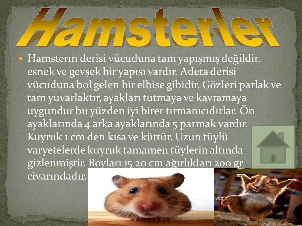Hamsterın derisi vücuduna tam yapışmış değildir, esnek ve gevşek bir yapısı vardır. Adeta derisi vücuduna bol gelen bir elbise gibidir. Gözleri parlak