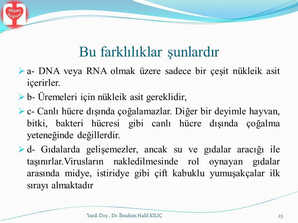 Bu farklılıklar şunlardır  a- DNA veya RNA olmak üzere sadece bir çeşit nükleik asit içerirler.  b- Üremeleri için nükleik asit gereklidir,  c- Can
