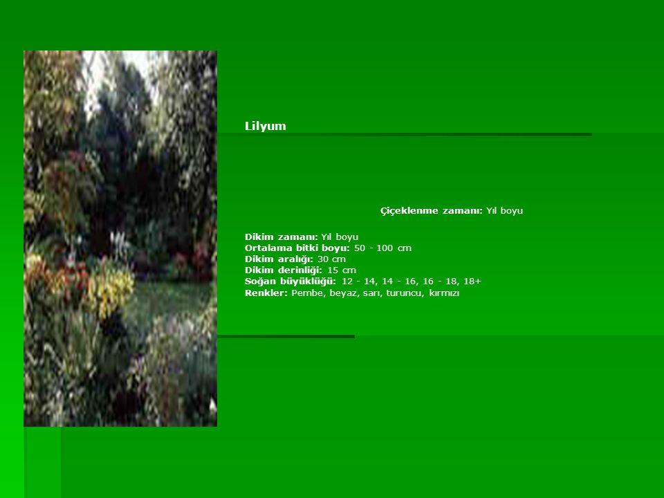 Lilyum Çiçeklenme zamanı: Yıl boyu Dikim zamanı: Yıl boyu Ortalama bitki boyu: 50 - 100 cm Dikim aralığı: 30 cm Dikim derinliği: 15 cm Soğan büyüklüğü