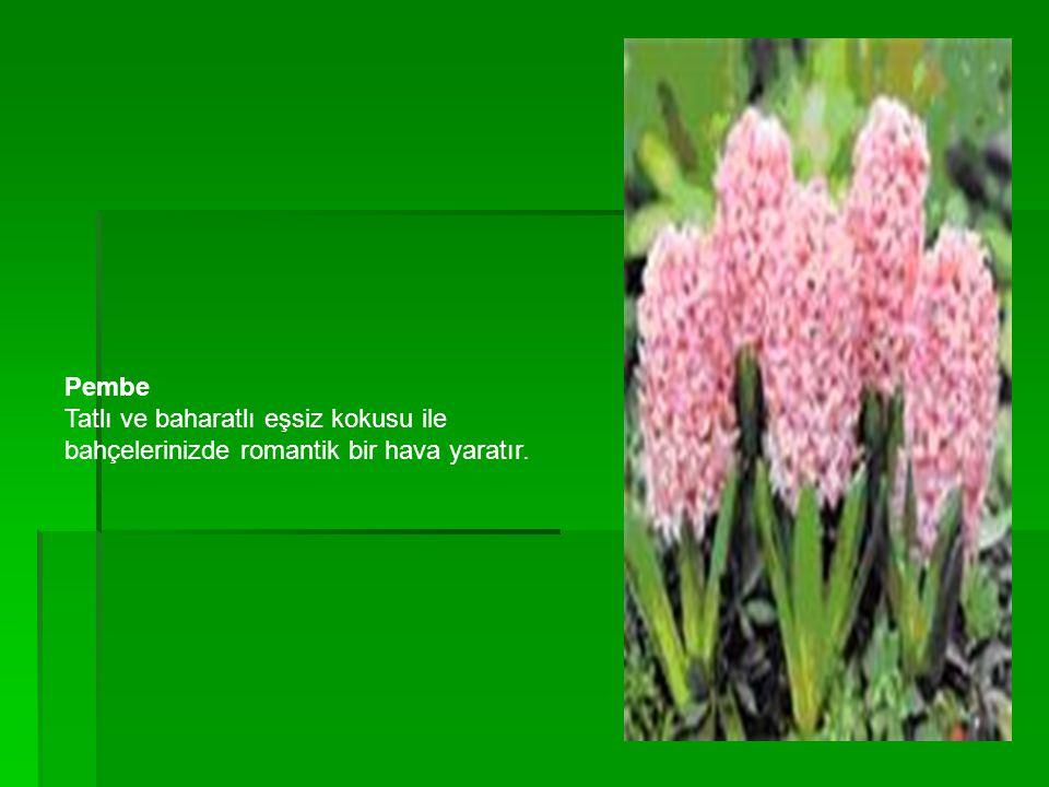 Pembe Tatlı ve baharatlı eşsiz kokusu ile bahçelerinizde romantik bir hava yaratır.