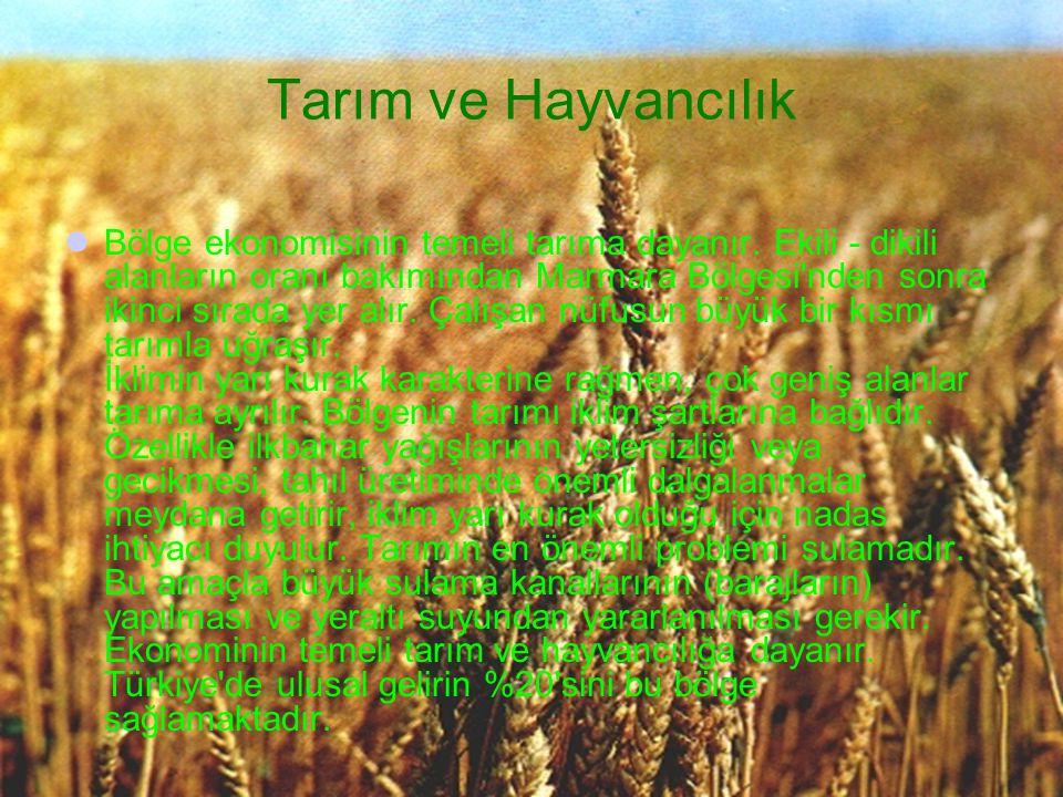 Bölge ekonomisinin temeli tarıma dayanır. Ekili - dikili alanların oranı bakımından Marmara Bölgesi'nden sonra ikinci sırada yer alır. Çalışan nüfusun