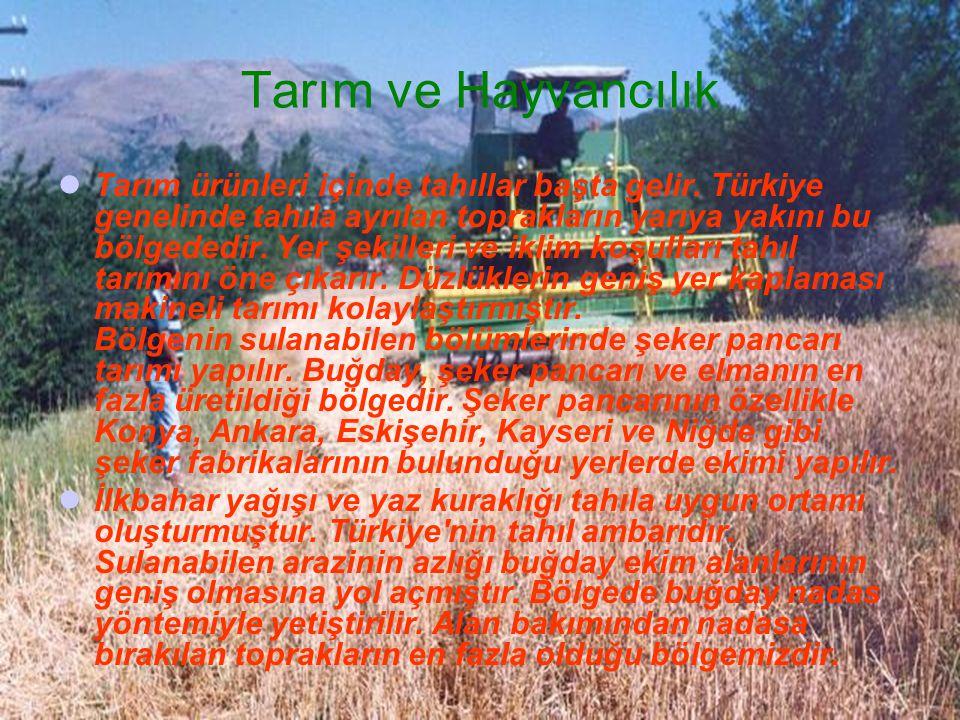 Tarım ürünleri içinde tahıllar başta gelir. Türkiye genelinde tahıla ayrılan toprakların yarıya yakını bu bölgededir. Yer şekilleri ve iklim koşulları