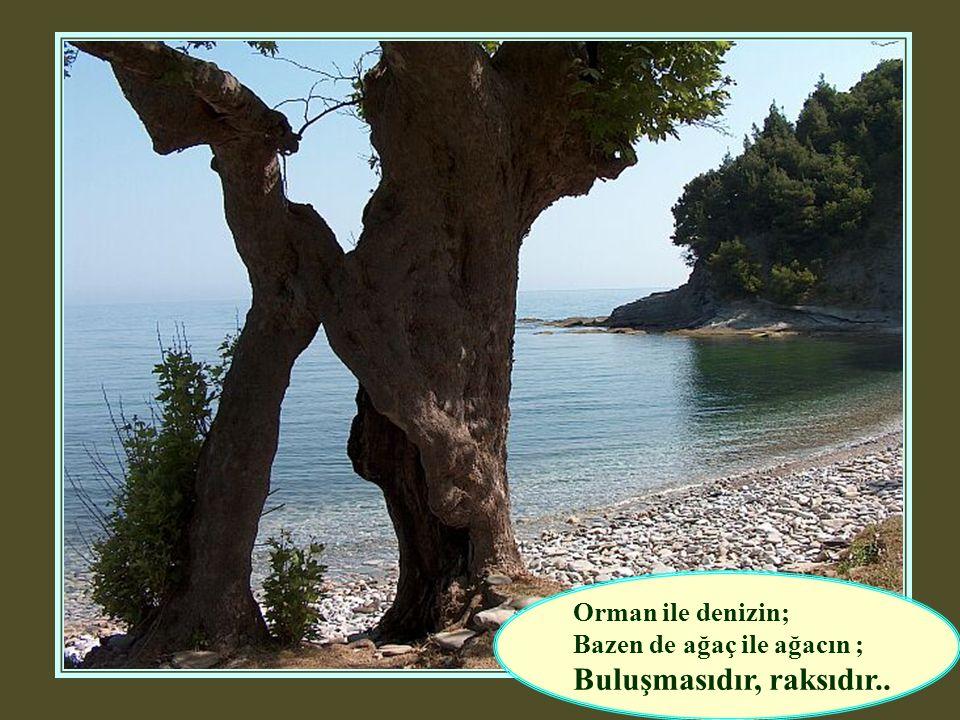 Orman ile denizin; Bazen de ağaç ile ağacın ; Buluşmasıdır, raksıdır..