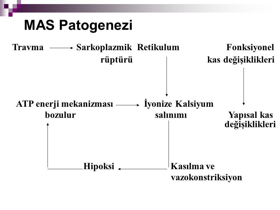 MAS Patogenezi ATP enerji mekanizması İyonize Kalsiyum bozulur salınımı Yapısal kas Travma Sarkoplazmik Retikulum Fonksiyonel rüptürü kas değişiklikle