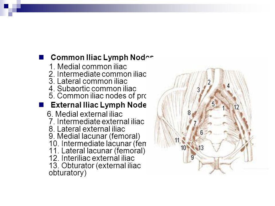 Common Iliac Lymph Nodes 1. Medial common iliac 2. Intermediate common iliac 3. Lateral common iliac 4. Subaortic common iliac 5. Common iliac nodes o