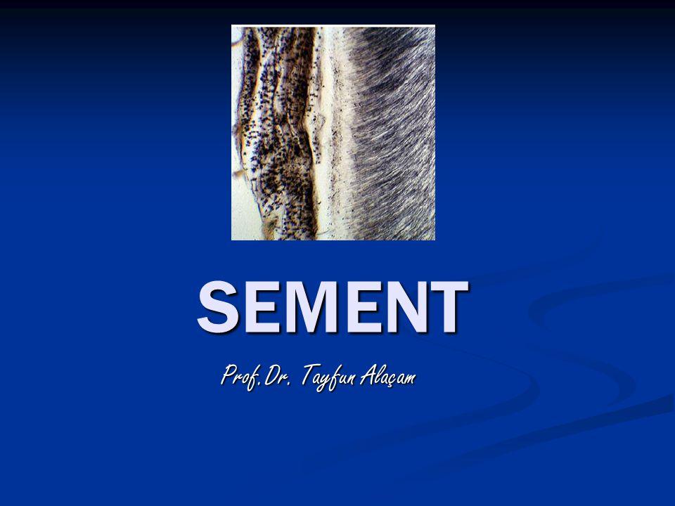 Sement, tipik olarak fizyolojik koşullar altında mineral salımı yapmayan mineralize bir dokudur.