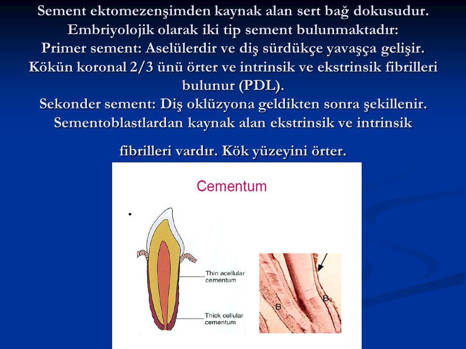 Sement fonksiyonları Dentini korur (Dentin kanalcıklarını örter) Dentini korur (Dentin kanalcıklarını örter) Periodontal fibrillerin bağlanmasını sağlar Periodontal fibrillerin bağlanmasını sağlar Rezorpsiyona karşı koyar Rezorpsiyona karşı koyar
