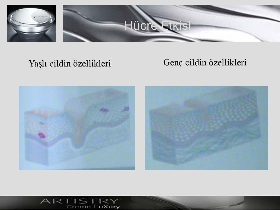 Hücre Etkisi Yaşlı cildin özellikleri Genç cildin özellikleri