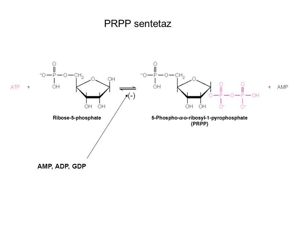 AMP, ADP, GDP PRPP sentetaz (-)