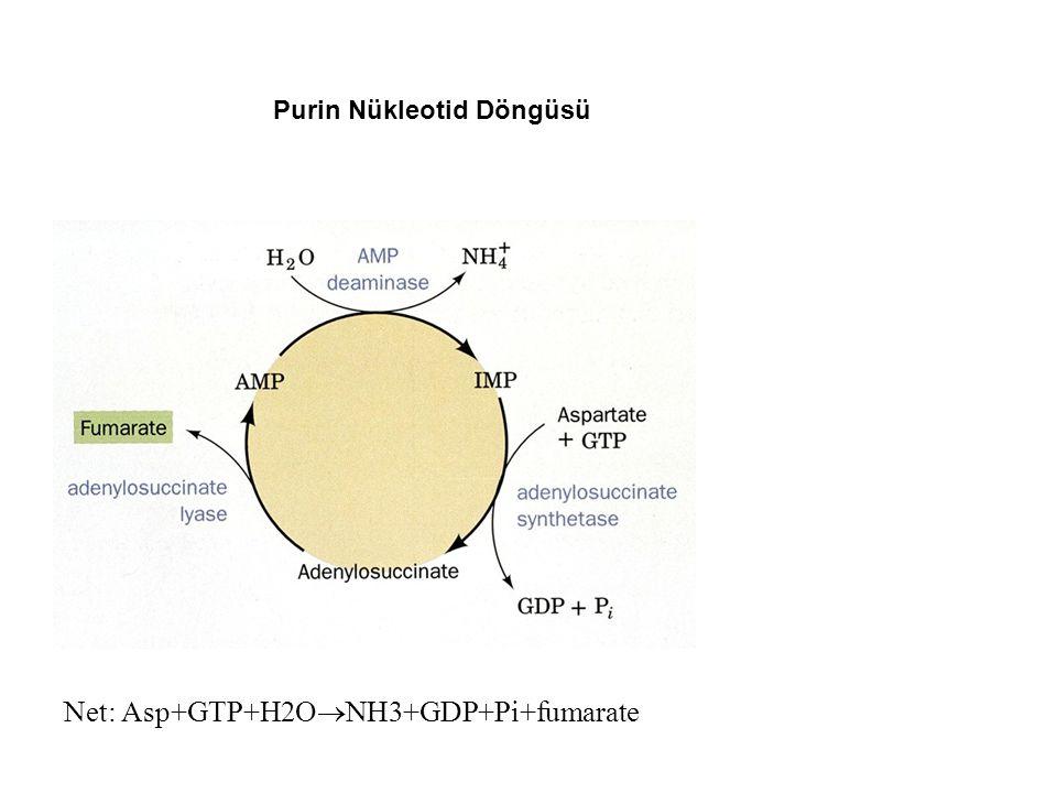 Net: Asp+GTP+H2O  NH3+GDP+Pi+fumarate Purin Nükleotid Döngüsü