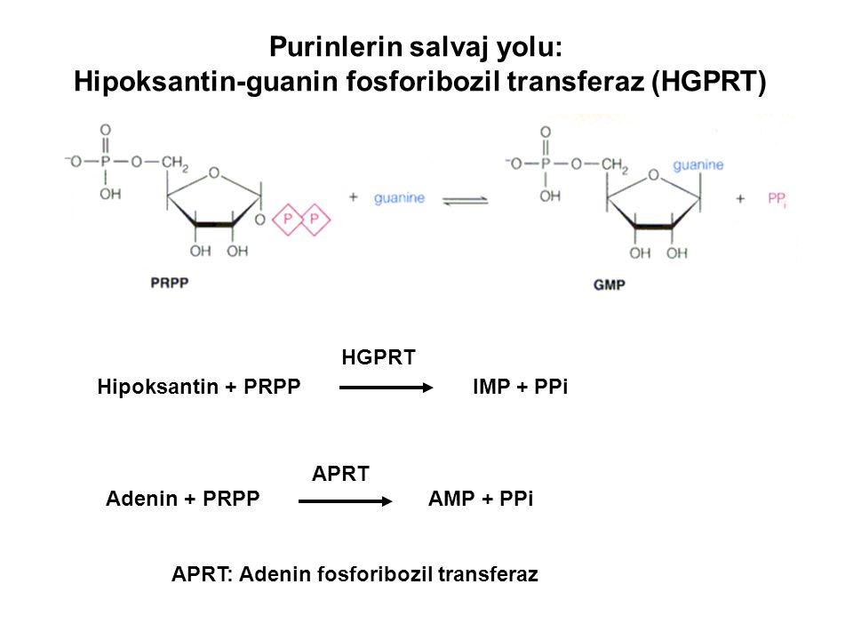 Purinlerin salvaj yolu: Hipoksantin-guanin fosforibozil transferaz (HGPRT) Adenin + PRPPAMP + PPi Hipoksantin + PRPP IMP + PPi HGPRT APRT APRT: Adenin