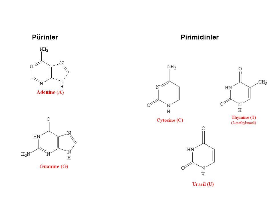 Transformilasyon reaksiyonları multiprot.
