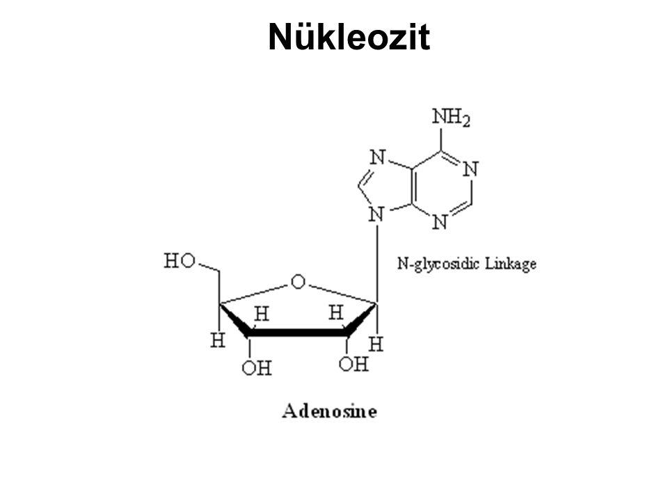 Nükleotid