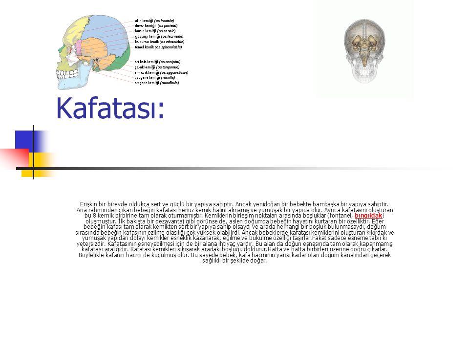 Kafatasımız Kafatasımızda göz,el,kulak,burun, Ağız gibi farklı ve çeşitli türlerin yer aldığı beyin aynı zamanda sinyaller taşır.Mesela çok çalışınca yorulduğumuzda beyin sen yoruldun der.Ve sinyal gönderir