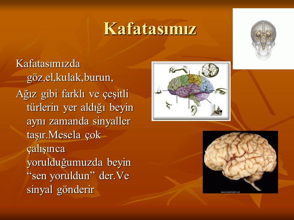 Kafatasımız Kafatasımızda göz,el,kulak,burun, Ağız gibi farklı ve çeşitli türlerin yer aldığı beyin aynı zamanda sinyaller taşır.Mesela çok çalışınca