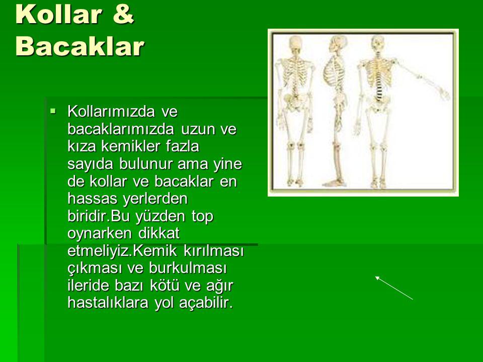 Kollar & Bacaklar  Kollarımızda ve bacaklarımızda uzun ve kıza kemikler fazla sayıda bulunur ama yine de kollar ve bacaklar en hassas yerlerden birid