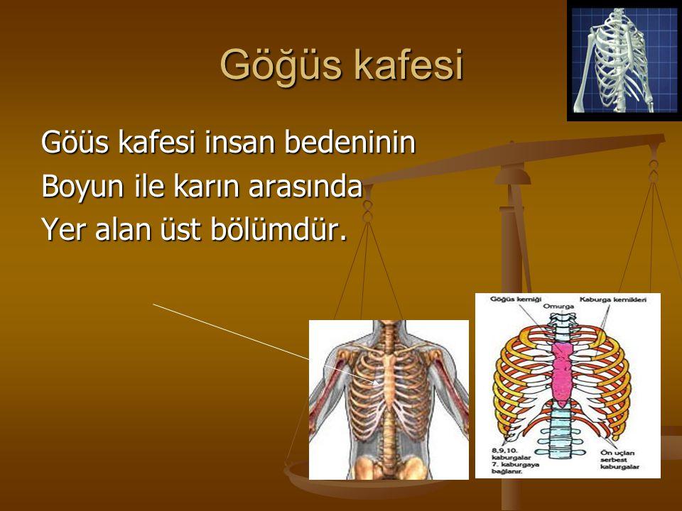 Göğüs kafesi Göüs kafesi insan bedeninin Boyun ile karın arasında Yer alan üst bölümdür.