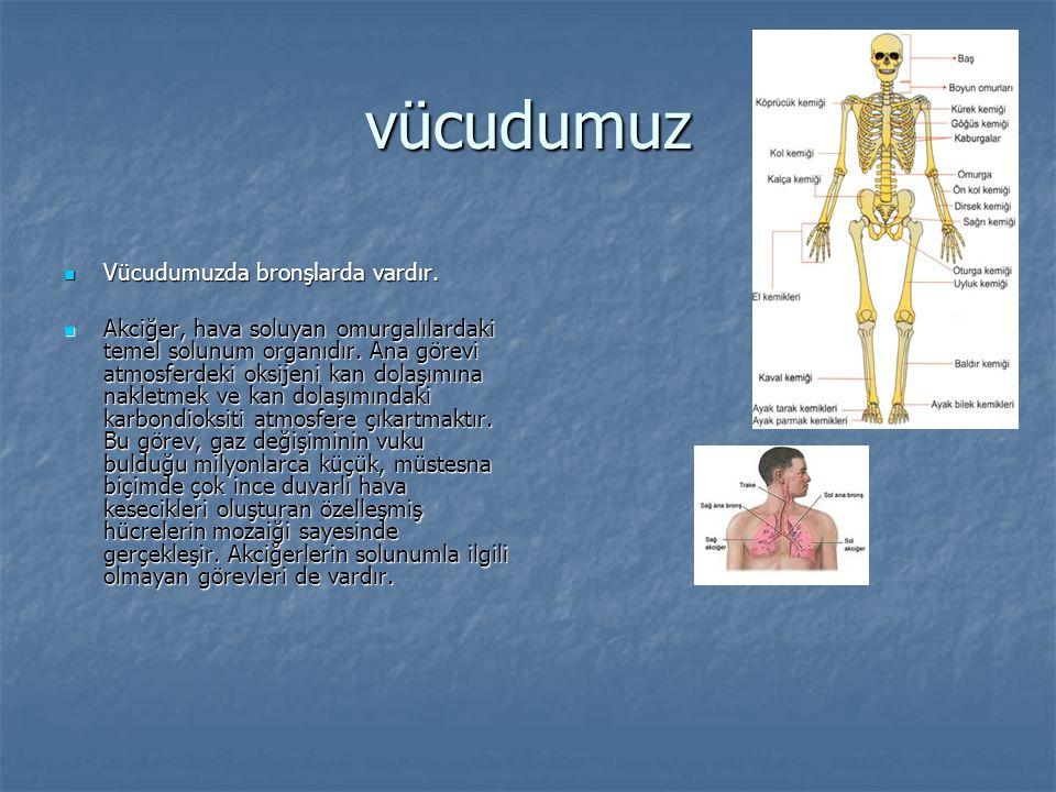 vücudumuz Vücudumuzda bronşlarda vardır. Vücudumuzda bronşlarda vardır. Akciğer, hava soluyan omurgalılardaki temel solunum organıdır. Ana görevi atmo