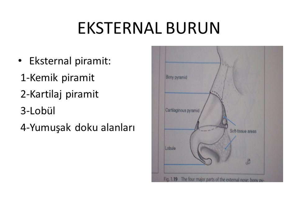 EKSTERNAL BURUN Eksternal piramit: 1-Kemik piramit 2-Kartilaj piramit 3-Lobül 4-Yumuşak doku alanları