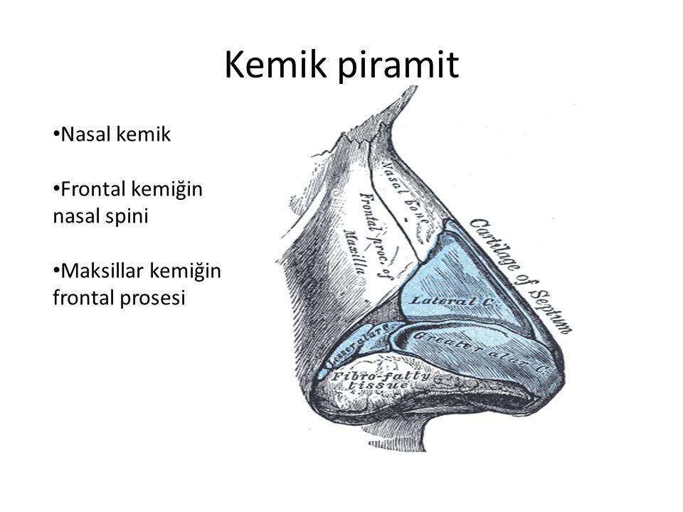 Kemik piramit Nasal kemik Frontal kemiğin nasal spini Maksillar kemiğin frontal prosesi