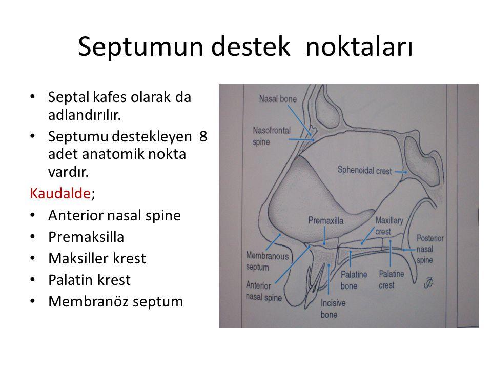 Septumun destek noktaları Septal kafes olarak da adlandırılır. Septumu destekleyen 8 adet anatomik nokta vardır. Kaudalde; Anterior nasal spine Premak