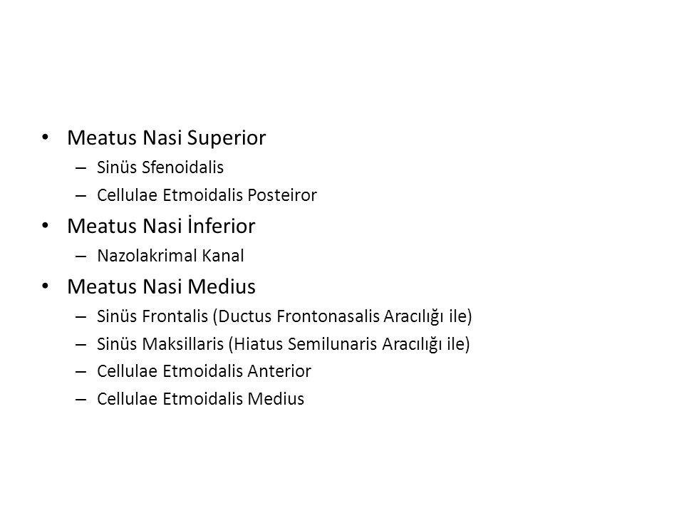 Meatus Nasi Superior – Sinüs Sfenoidalis – Cellulae Etmoidalis Posteiror Meatus Nasi İnferior – Nazolakrimal Kanal Meatus Nasi Medius – Sinüs Frontali