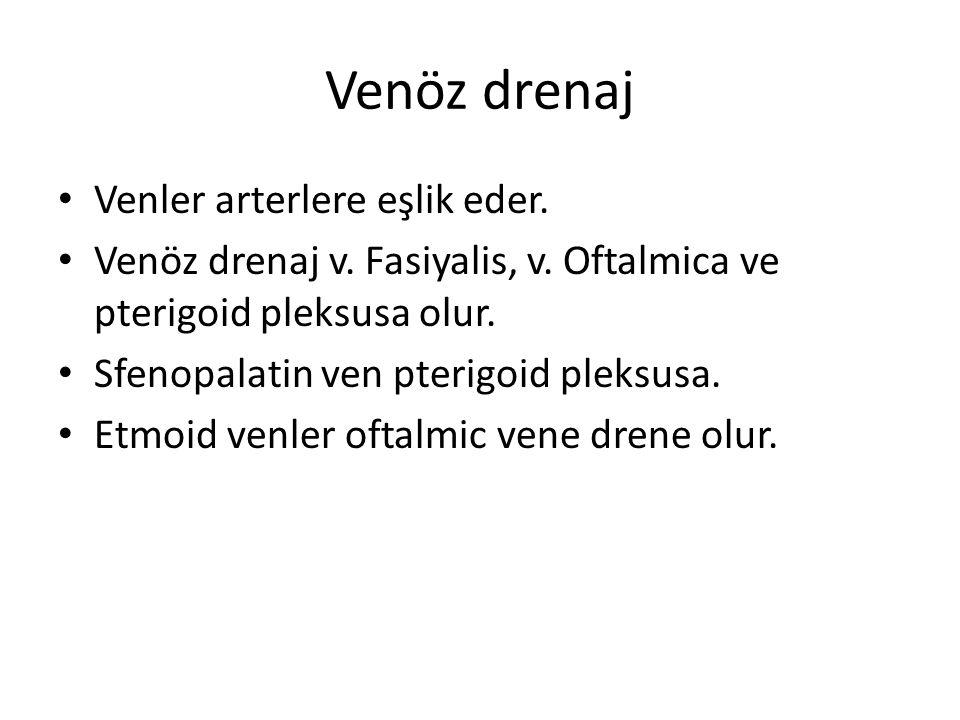 Venöz drenaj Venler arterlere eşlik eder. Venöz drenaj v. Fasiyalis, v. Oftalmica ve pterigoid pleksusa olur. Sfenopalatin ven pterigoid pleksusa. Etm